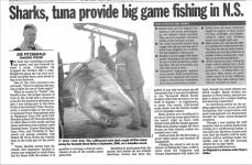 Sharks and tuna