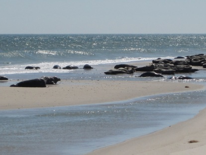 South Monomoy Island, off Cape Cod
